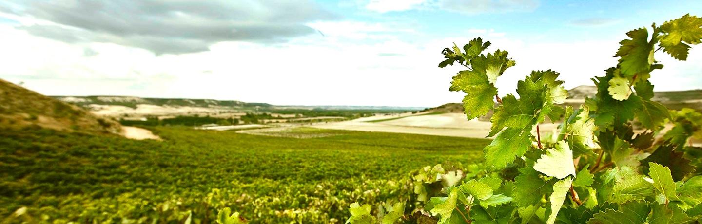Background Vinos Viñas LOA